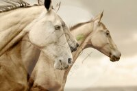 """Mint by Michelle """"Sepia Horses"""""""