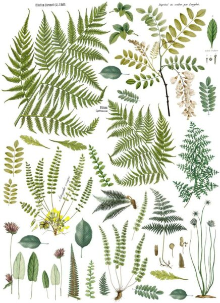 "IOD Decor Transfers ""Fronds Botanical"""
